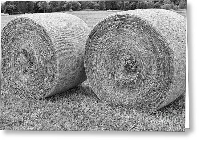 Round Hay Bales Black and White  Greeting Card by James BO  Insogna