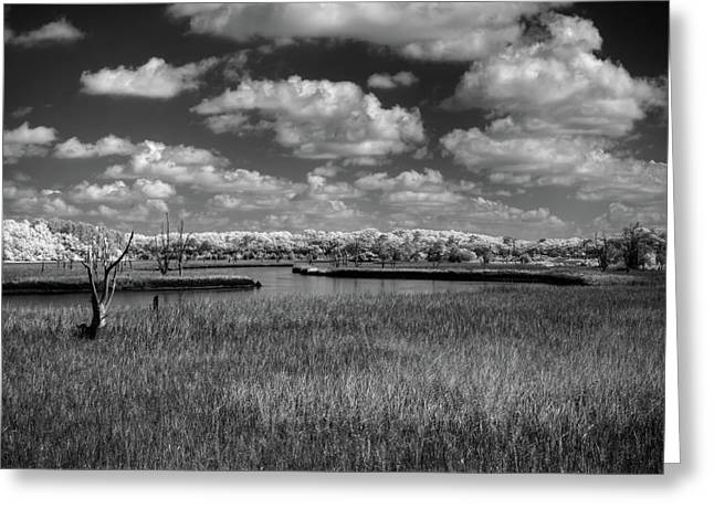 South Carolina Infrared Landscape Greeting Cards - Route 17 Greeting Card by Nick  Shirghio