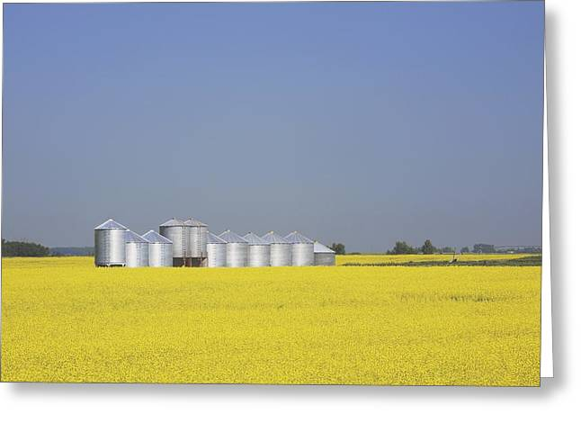 Grain Bin Greeting Cards - Row Of Metal Grain Bins In Canola Greeting Card by Michael Interisano