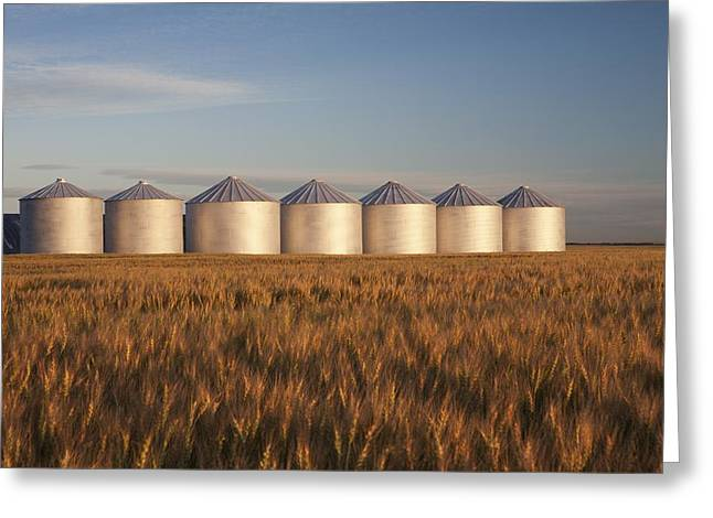 Grain Bin Greeting Cards - Row Of Shiny Metal Grain Bins In A Greeting Card by Michael Interisano