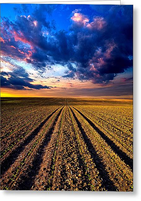 Geographic Greeting Cards - Rows and Rows Greeting Card by Phil Koch