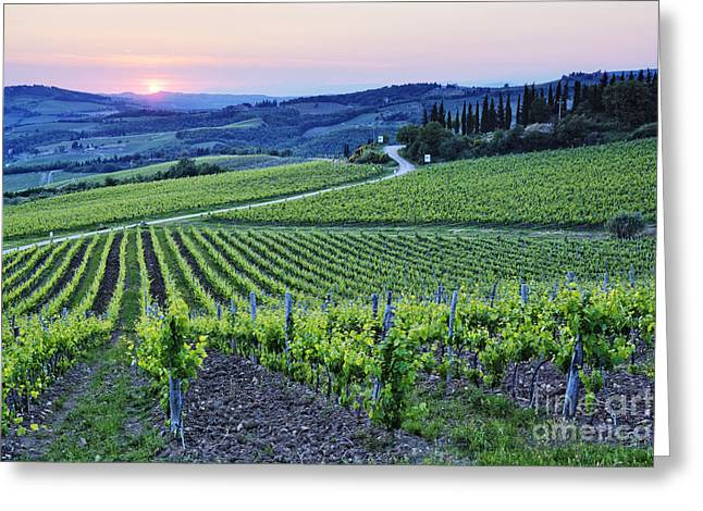 Chianti Greeting Cards - Rows of Grapevines at Sunset Greeting Card by Jeremy Woodhouse