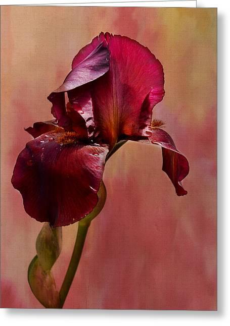 Kathy Jennings Photography Greeting Cards - Royal Iris Greeting Card by Kathy Jennings