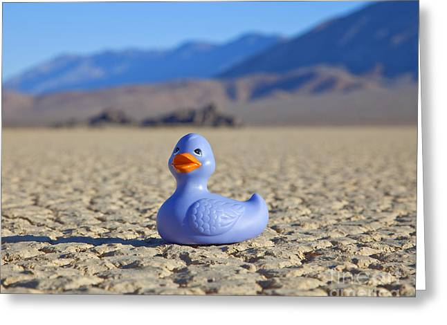 Rubber Ducky Greeting Cards - Rubber Duck in Desert Greeting Card by David Buffington