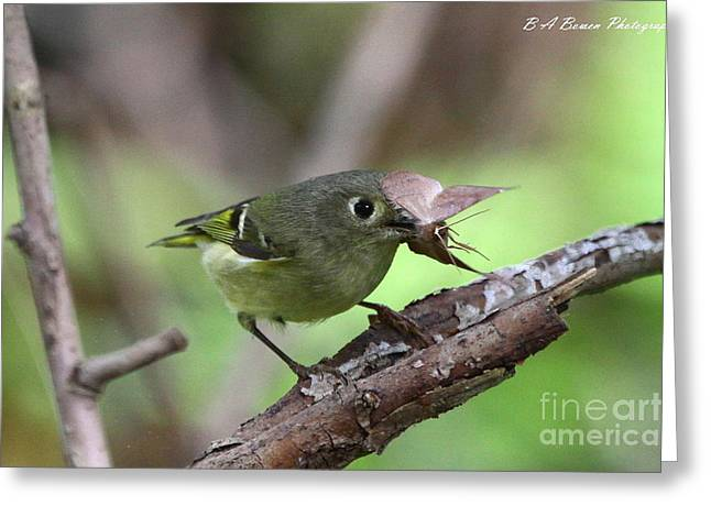 Birdwatching. B A Bowen Photography Greeting Cards - Ruby-Crowned Kinglet nabs a moth Greeting Card by Barbara Bowen