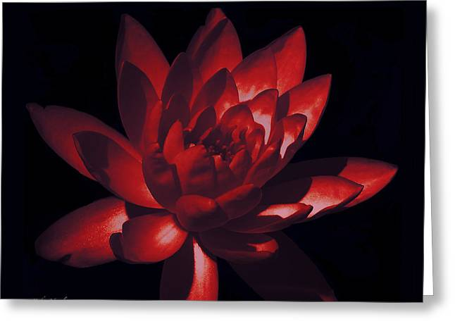 Stimulating Colored Flower Greeting Cards - Ruby Of The Night Greeting Card by Debra     Vatalaro