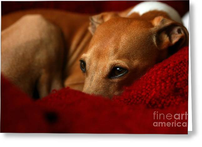 Lazy Red Dog Greeting Cards - Ruby Rest Greeting Card by Angela Rath