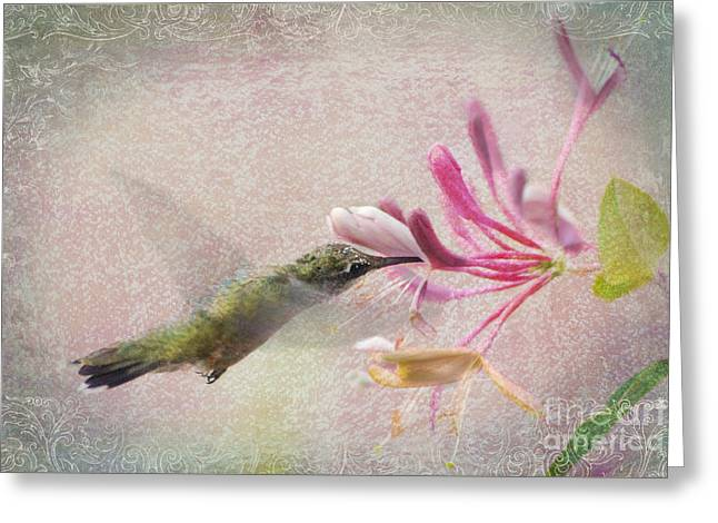 Hovering Greeting Cards - Ruby Throated Hummingbird #3 Greeting Card by Betty LaRue