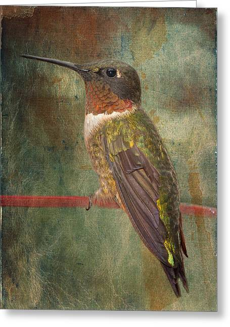 Ruby Throated Hummingbird Greeting Cards - Ruby Throated Hummingbird Greeting Card by Bonnie Barry