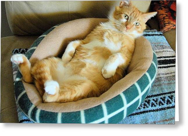 Photo Of Cat Greeting Cards - Rudys Nap Time Greeting Card by Cheryl Poland