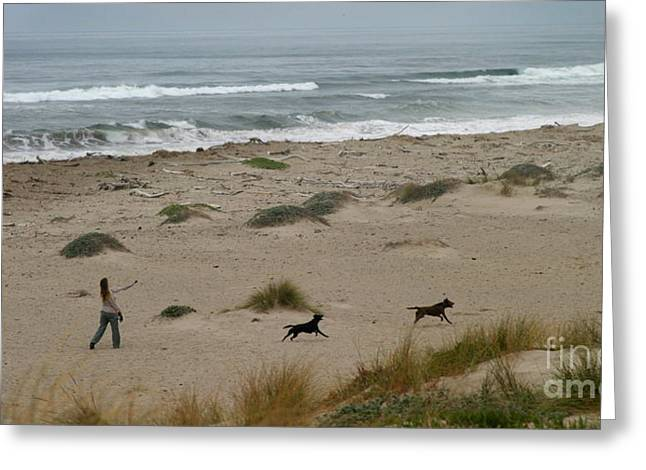 Dog Play Beach Greeting Cards - Run My Dogs Greeting Card by Henrik Lehnerer