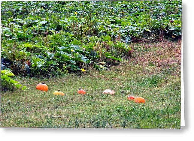 Runaway Pumpkins Greeting Card by Kay Sawyer