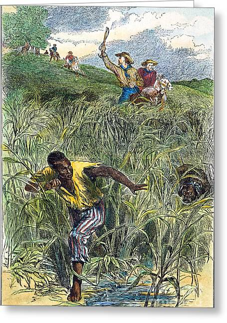 Canebrake Greeting Cards - Runaway Slave Hunt Greeting Card by Granger