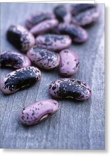 Runner Greeting Cards - Runner Beans (phaseolus scarlet Runner) Greeting Card by Maxine Adcock