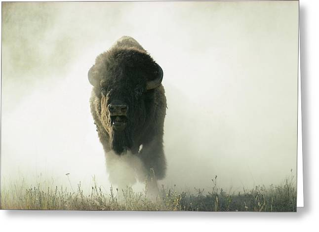National Bison Range Greeting Cards - Running Bison Kicking Up Dust Greeting Card by Lowell Georgia