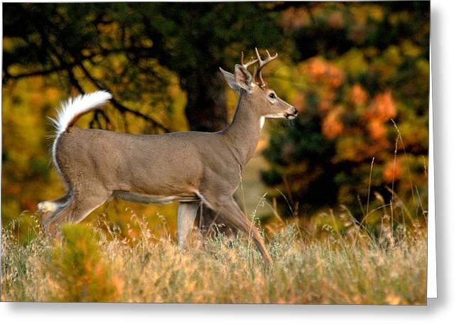 Running Buck Greeting Card by Larry Ricker