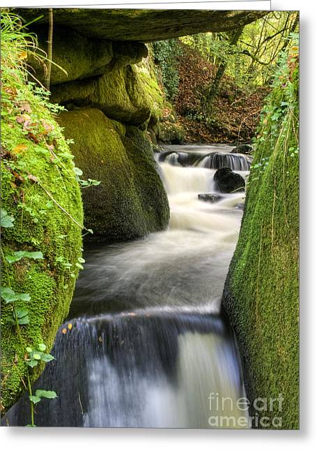 Moss Green Greeting Cards - Running By Greeting Card by Sophie De Roumanie