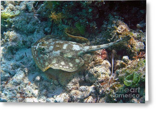 Undersea Photography Greeting Cards - Running For Cover Greeting Card by Li Newton
