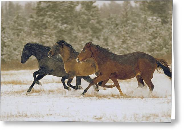 Empowerment Greeting Cards - Running Horses Greeting Card by Darwin Wiggett