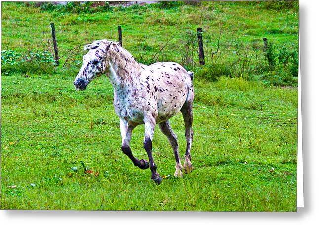 Green Pasture Greeting Cards - Running it Off Greeting Card by Betsy C  Knapp