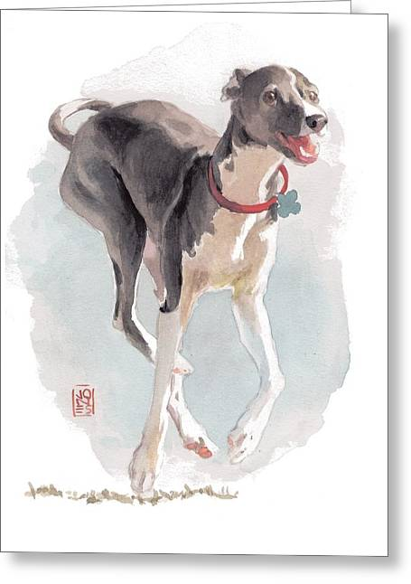 Debra Jones Greeting Cards - Running Italian Greeting Card by Debra Jones