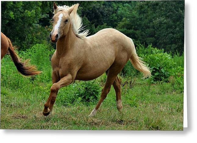 Equine Greeting Cards - Running Palomino Yearling - c0791d Greeting Card by Paul Lyndon Phillips