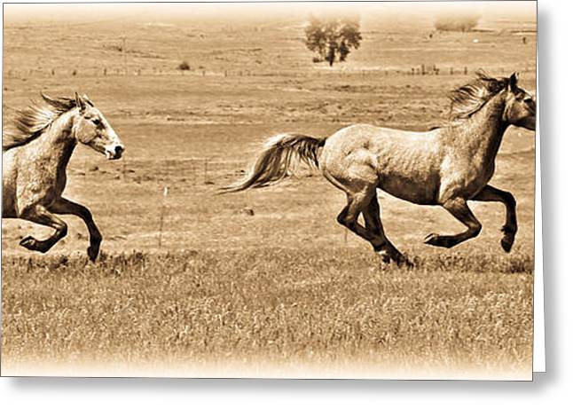 The Horse Greeting Cards - Running Wild Greeting Card by Steve McKinzie
