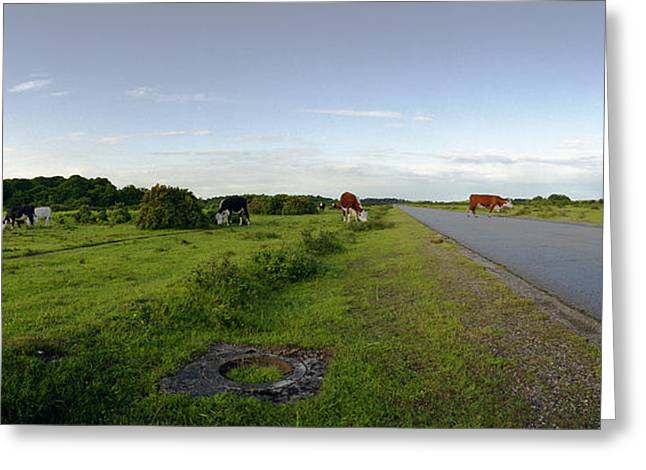 Fighter-bomber Photographs Greeting Cards - Runway Light with Cows Greeting Card by Jan Faul