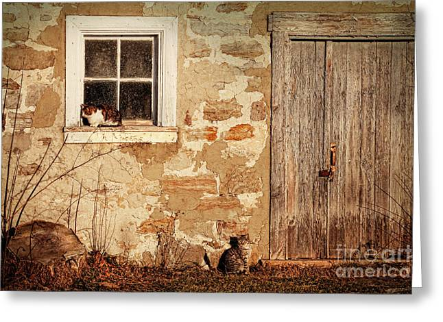 Ranch Greeting Cards - Rural barn with cats laying in the sun  Greeting Card by Sandra Cunningham