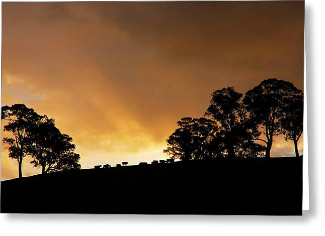 Gum-tree Greeting Cards - Rural Glory Greeting Card by Mike  Dawson