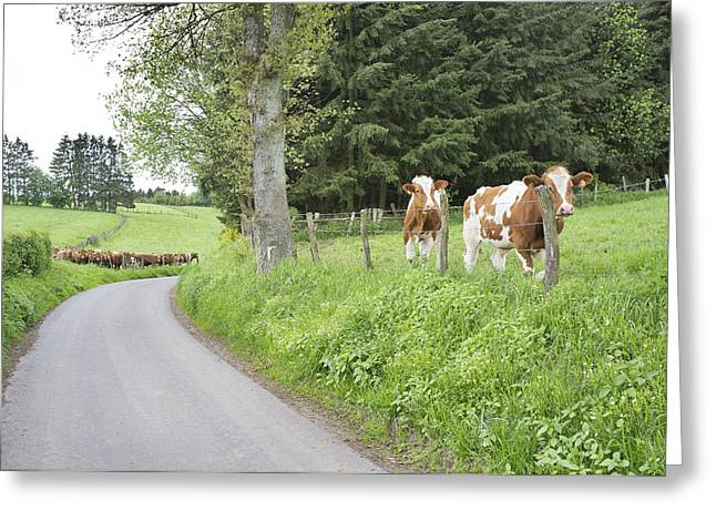 Animal Behaviour Greeting Cards - Rural Landscape. A Country Road Greeting Card by Corepics