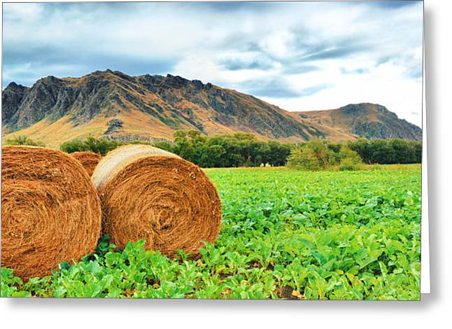 Bale Greeting Cards - Rural lanscape Greeting Card by MotHaiBaPhoto Prints