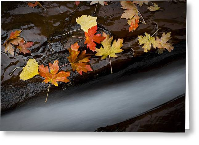 Ground Greeting Cards - Rushing Autumn Greeting Card by Jim Speth