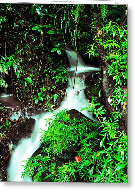 Puerto Rico Greeting Cards - Rushing Stream El Yunque National Forest Greeting Card by Thomas R Fletcher