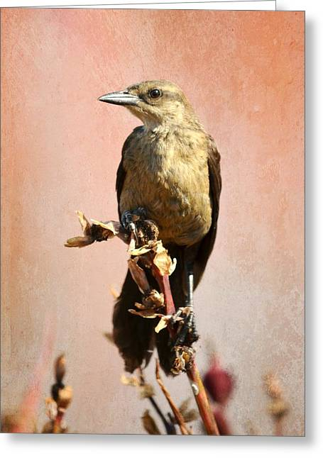 Birds On A Branch Greeting Cards - Russet Perch Greeting Card by Fraida Gutovich