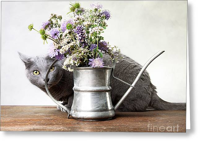 Whiskers Greeting Cards - Russian Blue 03 Greeting Card by Nailia Schwarz