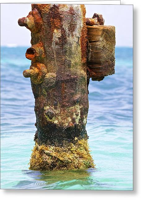 Reddish Flaking Iron Oxide Greeting Cards - Rusted Dock Pier of the Caribbean II Greeting Card by David Letts