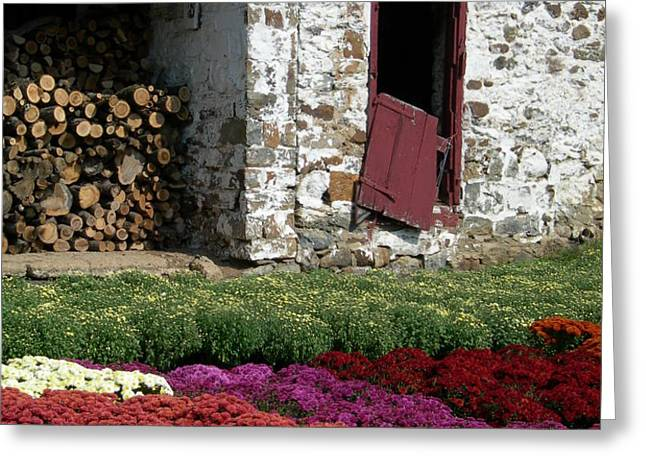 Rustic Acres II Greeting Card by Sheila Rodgers