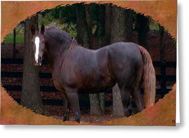 Horse Images Mixed Media Greeting Cards - Rustic Beauty  Greeting Card by Debra     Vatalaro