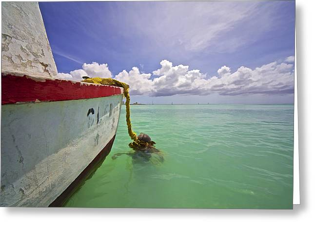 David Letts Greeting Cards - Rustic Fishing Boat of Aruba Greeting Card by David Letts