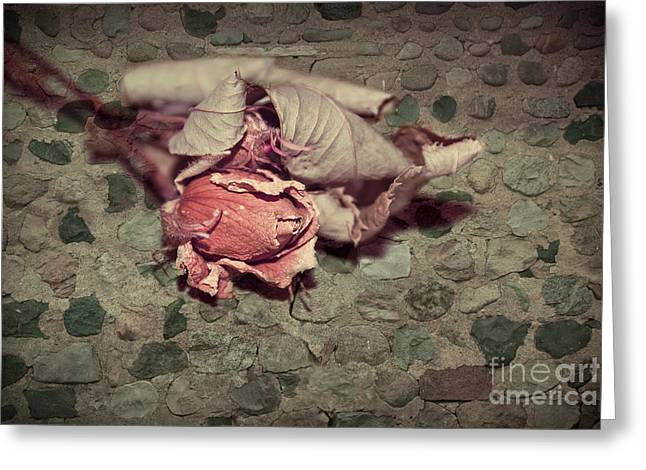 Aimelle Photography Greeting Cards - Rustic Rose Greeting Card by Aimelle
