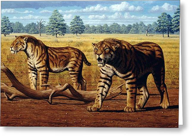 Sharp Teeth Greeting Cards - Sabre-toothed Cats, Artwork Greeting Card by Mauricio Anton