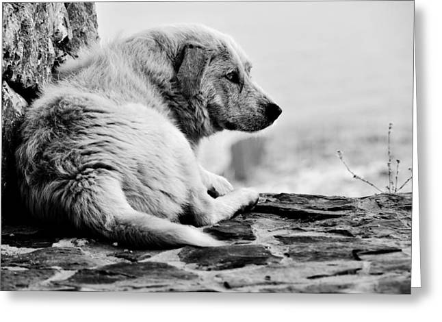 Tired Dog Greeting Cards - Sad Greeting Card by Laura Melis