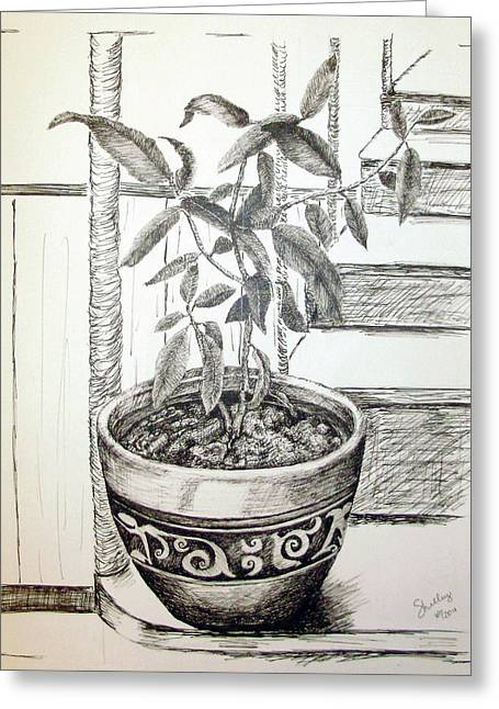 Potted Plants Drawings Greeting Cards - Sage Greeting Card by Shelley Bain