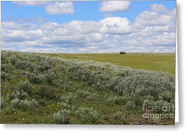 Sagebrush Greeting Cards - Sagebrush and Buffalo Greeting Card by Carol Groenen