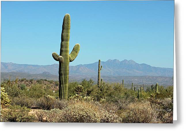 Giclee Cactus Greeting Cards - Saguaro Scenic II Greeting Card by Suzanne Gaff
