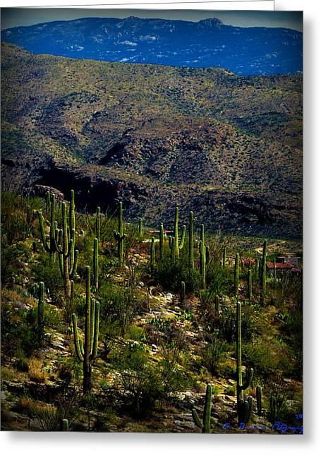 Rincon Greeting Cards - Saguaro Views to Rincon Peaks Greeting Card by Aaron Burrows