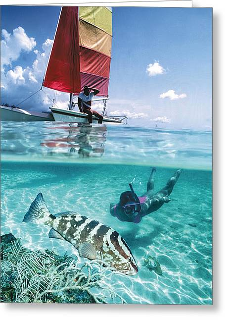 Nassau Grouper Greeting Cards - Sail and Shell Greeting Card by Burton McNeely