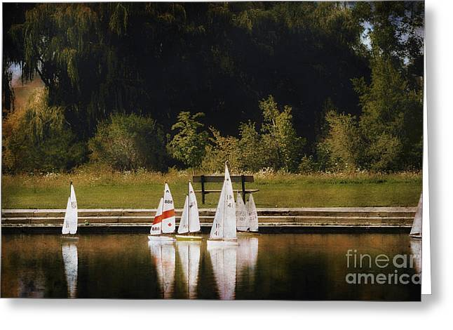 Toy Boat Greeting Cards - Sailboat Regatta Greeting Card by Elaine Manley