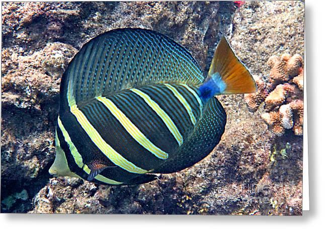 Reef Fish Greeting Cards - Sailfin Tang Expanded Greeting Card by Bette Phelan